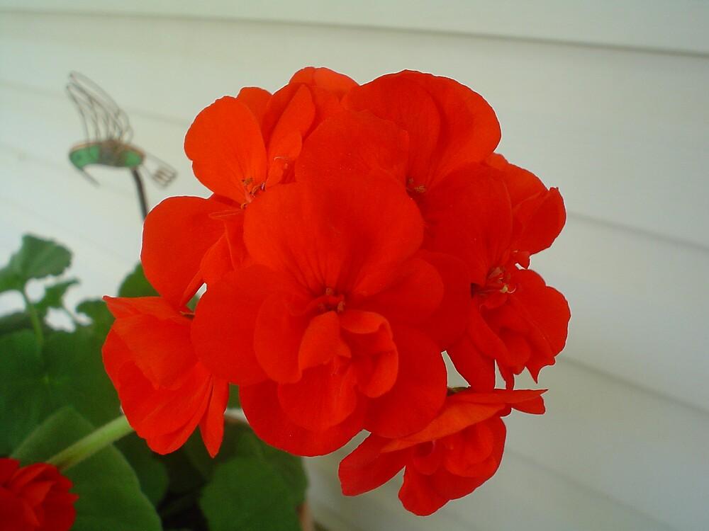 Beautiful Red by LindaSlauson