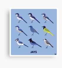 Jays Canvas Print
