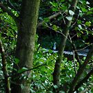 The elusive heron 2 by dougie1