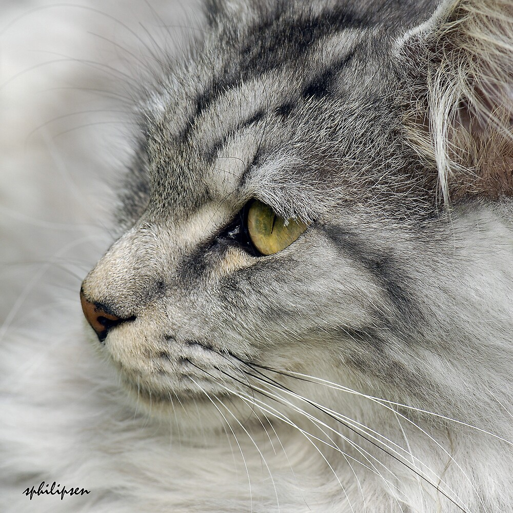a cat but yust like a lion by sjef