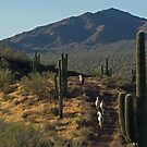 Wild Horses of the Sonoran Desert by Sue  Cullumber