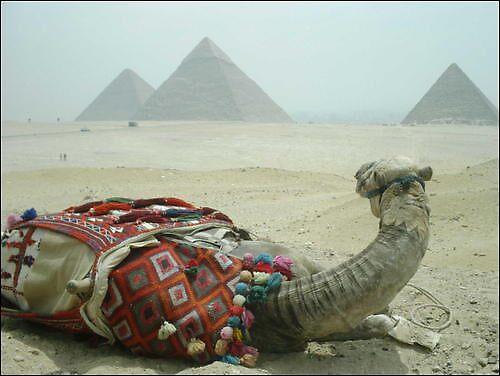 Resting Camel  by Irishchicky