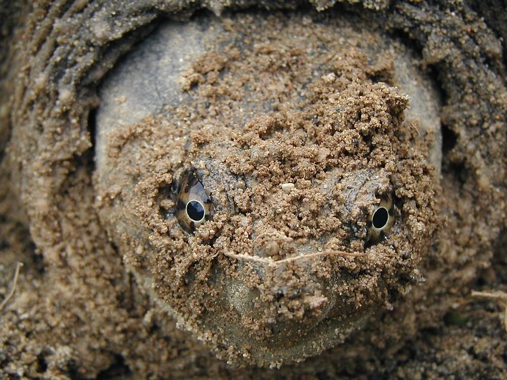 Female Turtle by declown