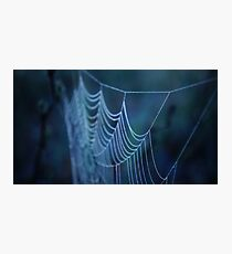 Dew Covered Spider Web Macro Photographic Print