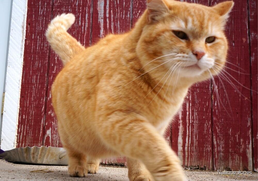 Fat Orange Cat by Nalinne Jones