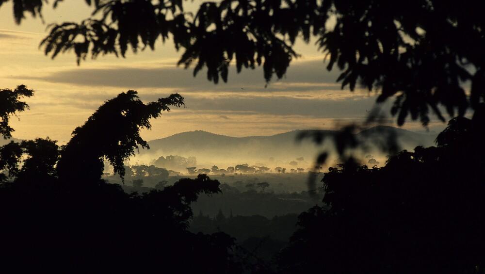 Madusadona Morning - Zimbabwe by bertspix