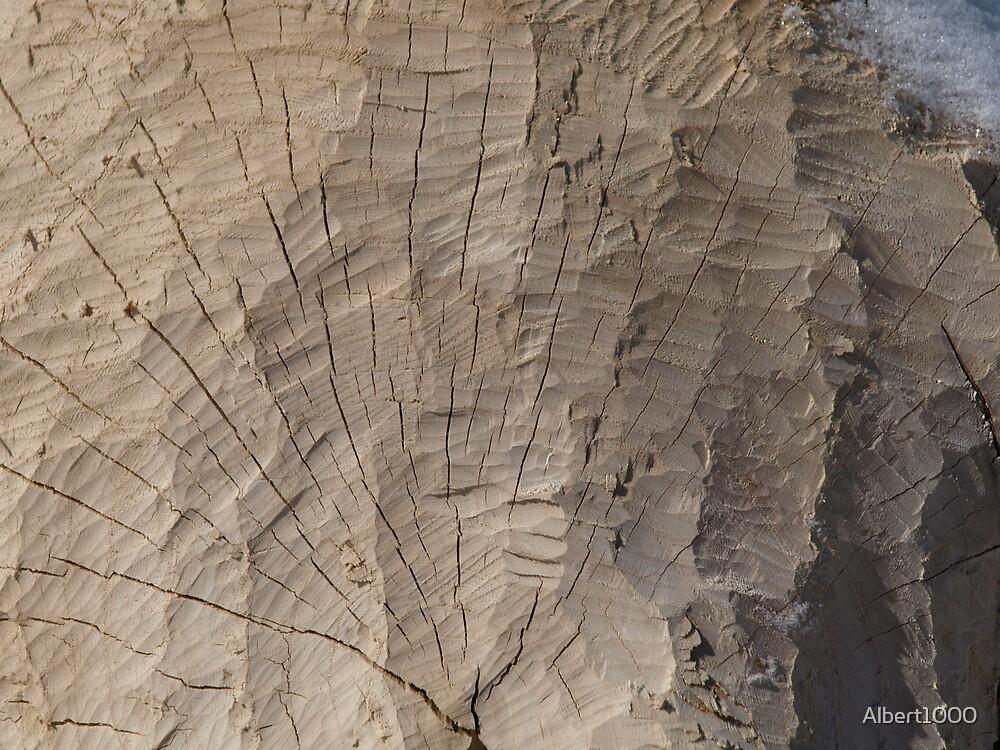 NC Beaver's tree detail by Albert1000