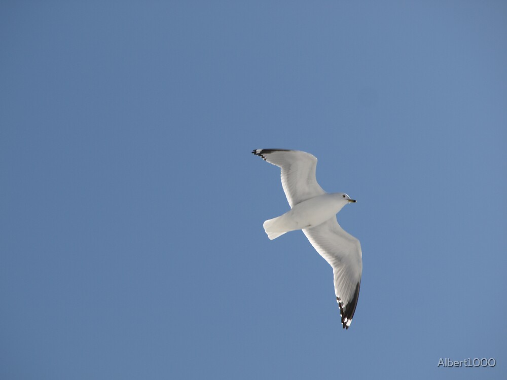 NC Fly like a SEAGULL #2 by Albert1000