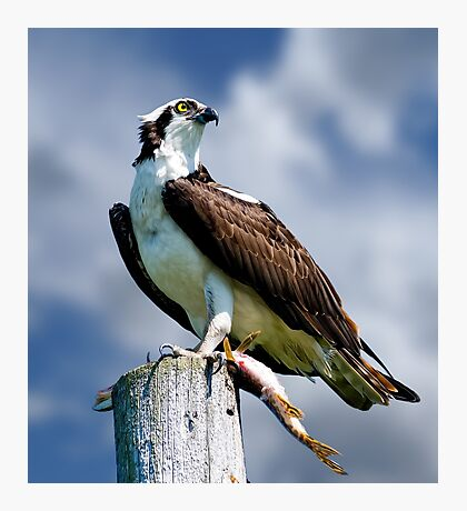 Osprey with Pike Photographic Print