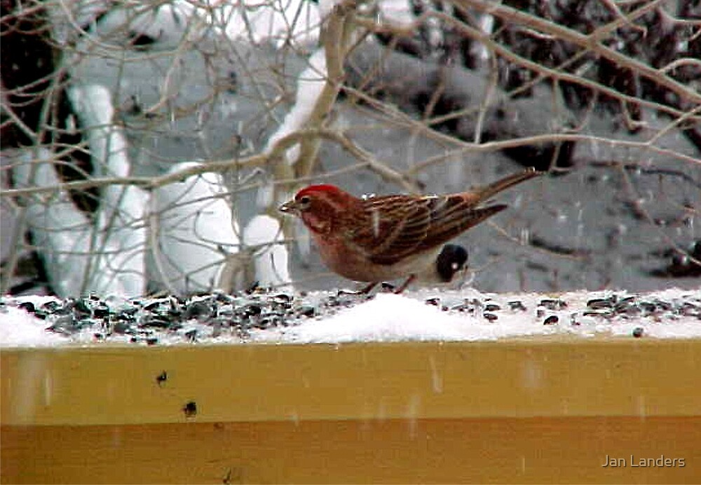 SnowBird by Jan Landers