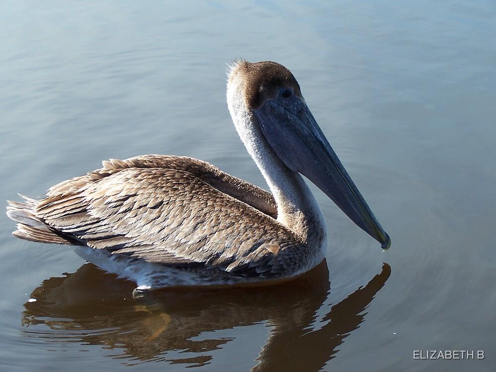 water bird by ELIZABETH B