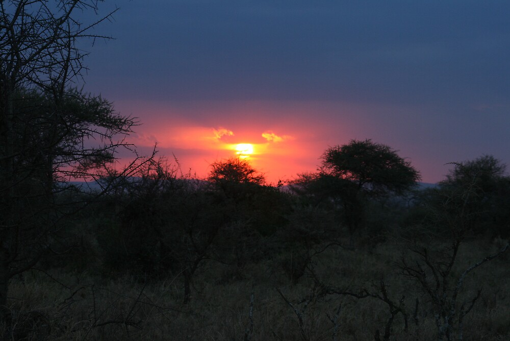 Sunset in the Serengeti by Michelle Thomson
