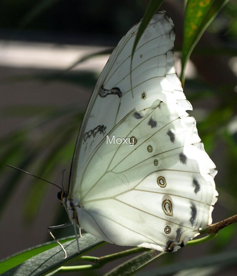 Pale Butterfly by Moxy