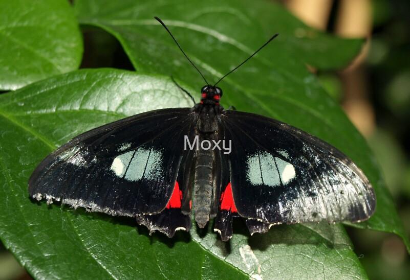 Butterfly 2 by Moxy