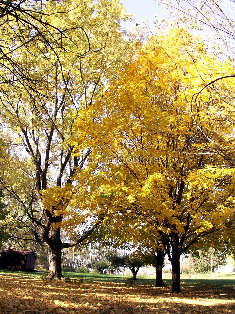 Autumn Yellow. by Tanya Bowers