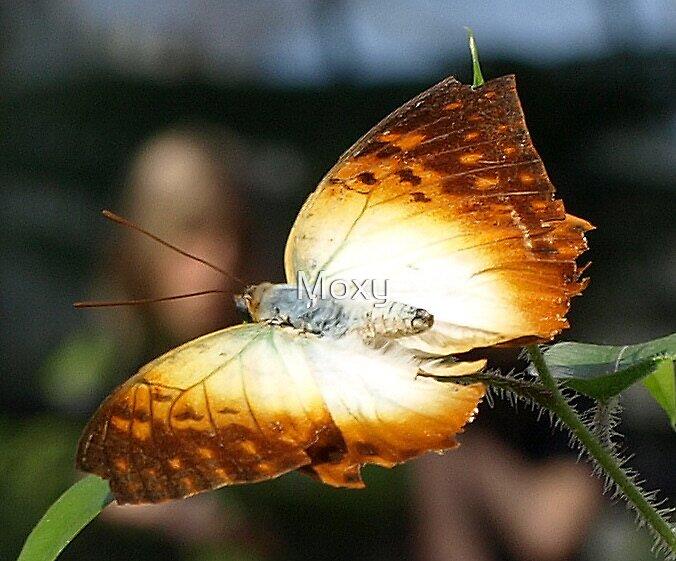 Butterfly 4 by Moxy