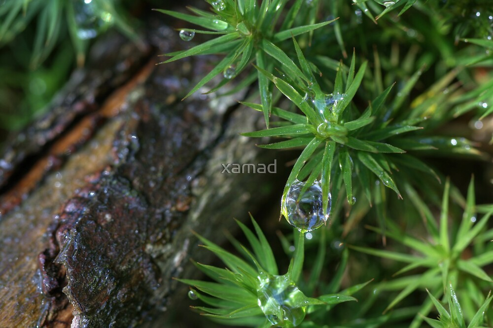 a jewel between grass by xamad