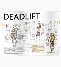 Exercise Diagram - Deadlift Poster