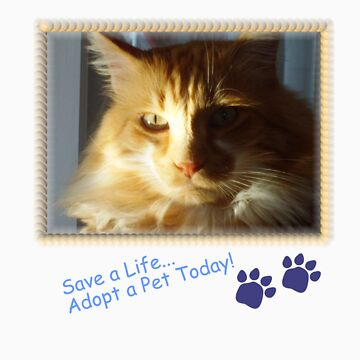 Adopt a Pet by catscan