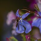 Feeding Hoverfly by MikeThomas