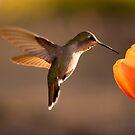 Sun Setting on a Hummer & Tulip by Daniel J. McCauley IV