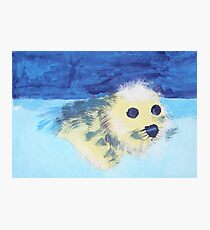 Seal Pup - Rhian Photographic Print