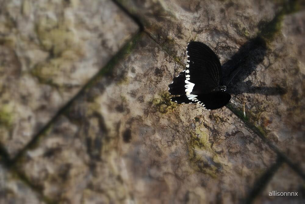 Butterfly I by allisonnnx