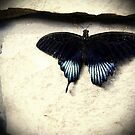 Butterfly II by allisonnnx