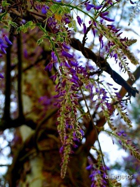 grape tree by alliegator