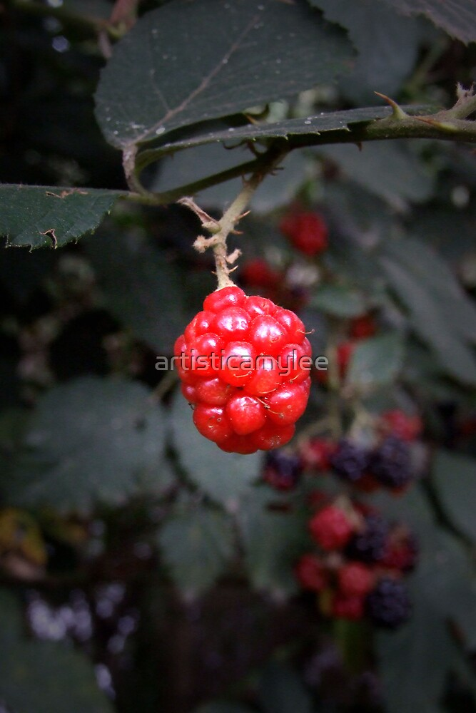 Berry Red by Amy-lee Foley