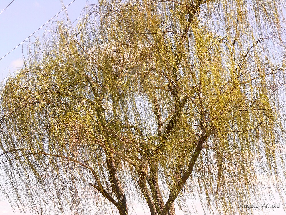 weeping willow by Angela  Arnold