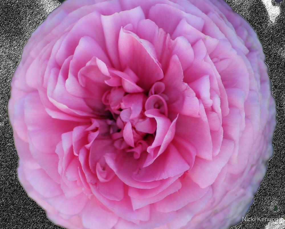 Flower closeup by Nicki Kenyon