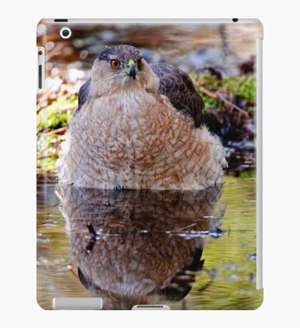 Coopers Hawk - Ottawa, Ontario iPad Case/Skin