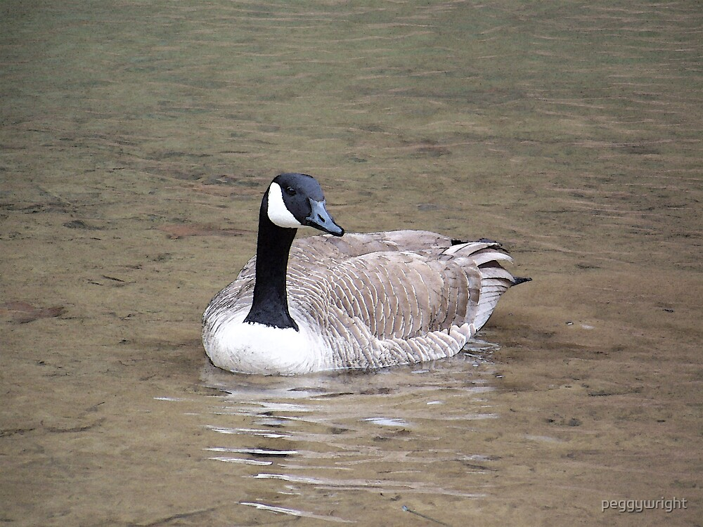 Spring Goose 2008 by peggywright