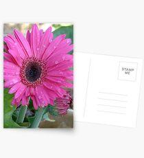 Gerber Daisy Postcards