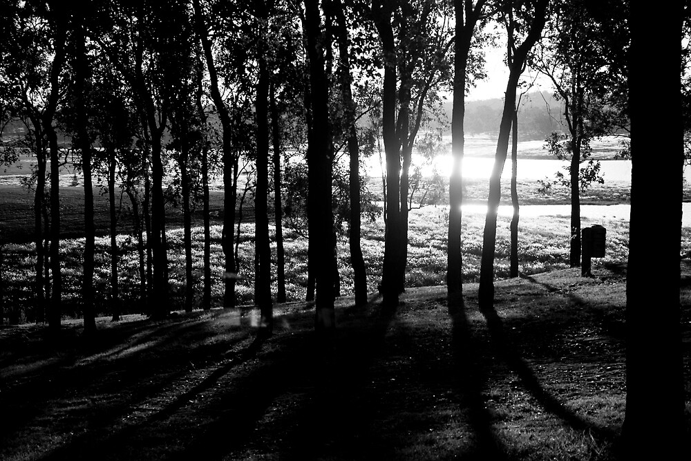 Sun floating through trees by Alecia Scott