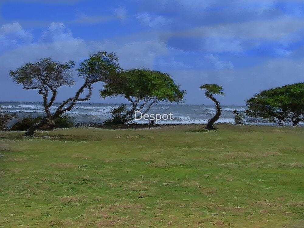 Hawaii by Despot