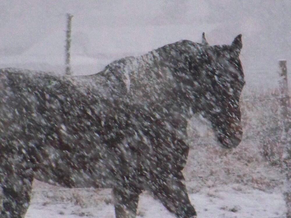 "NO WAY,, TOOK THIS 10 MINS. AGO,,""IT IS SNOWING"" EEEKKKK by conilouz"