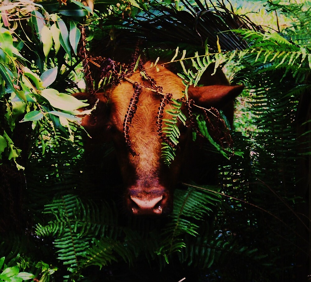 Bull emerging from primeval forest by Barbara Morrison