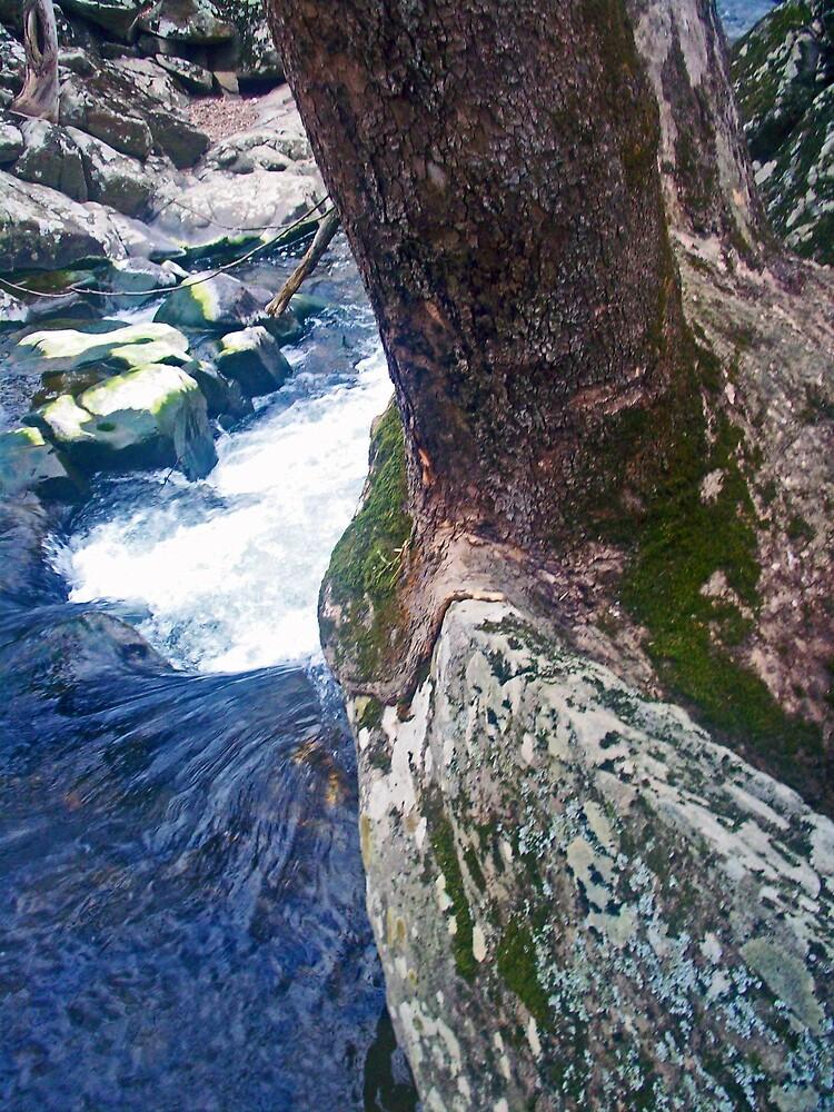 Beauty Over The Rocks by Semetra