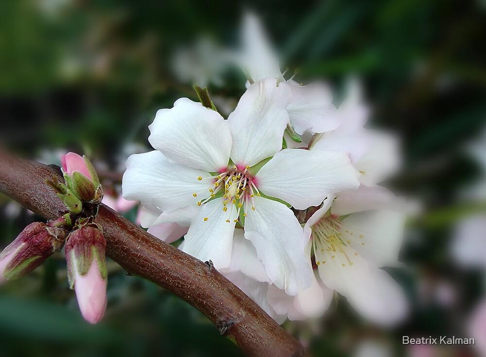 Spring Petals by BMV1