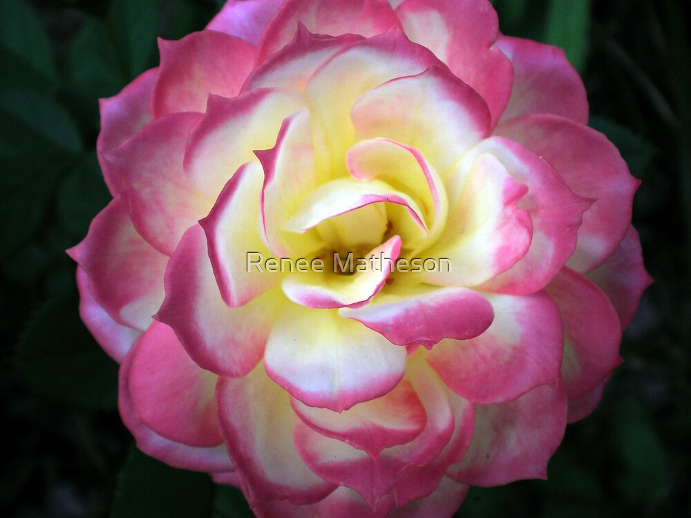 another flower photo by Renee Matheson
