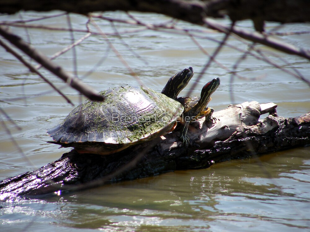 turtles on willow by Brenda Loveless
