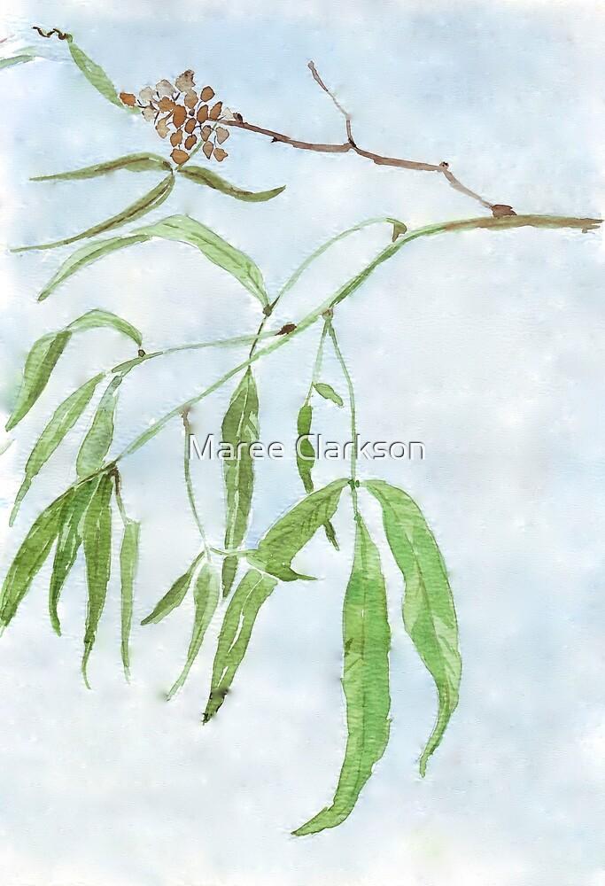 Rhus lancea leaves - Black Karee - Botanical illustration by Maree Clarkson