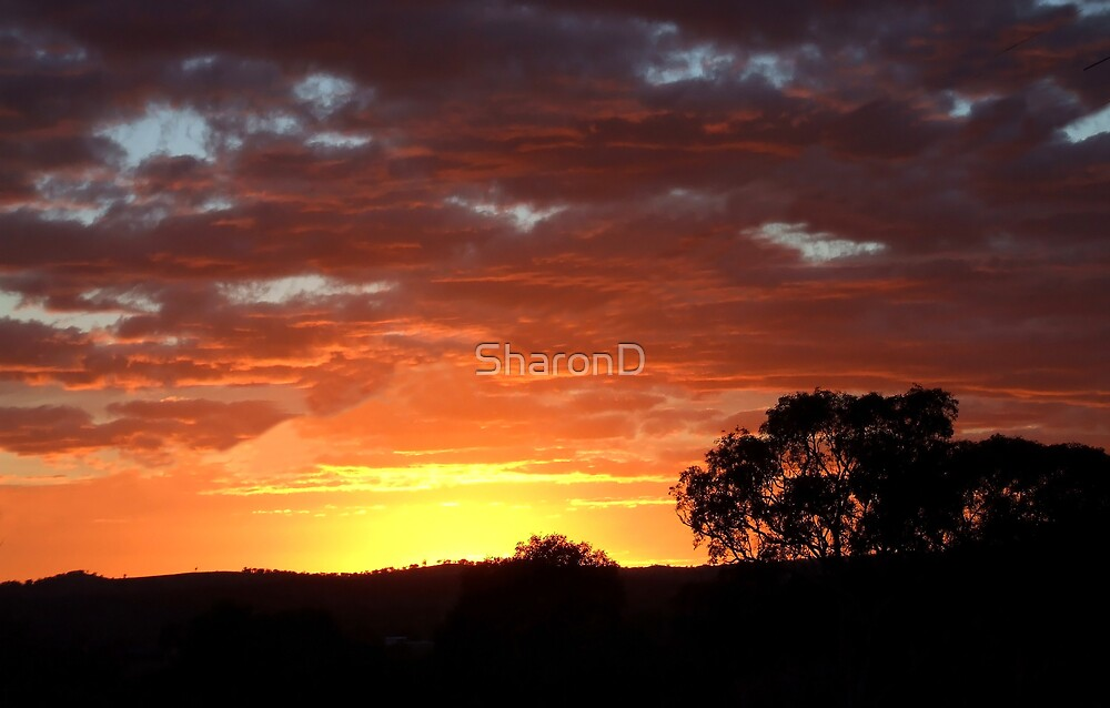 Sunrise by SharonD