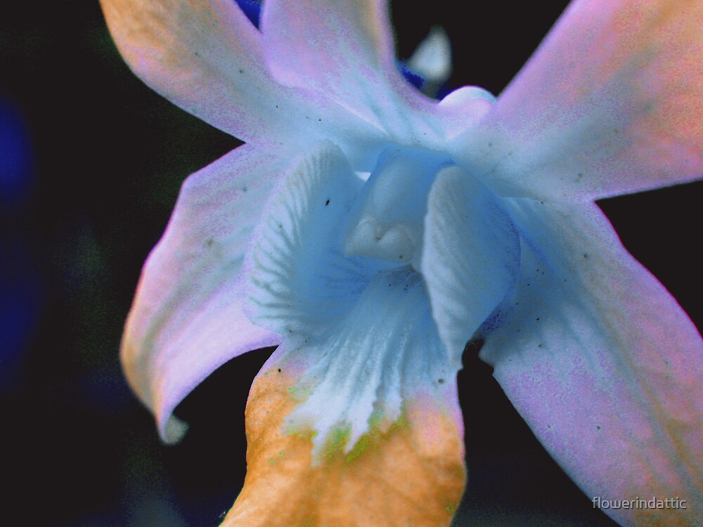 flower 2 by flowerindattic