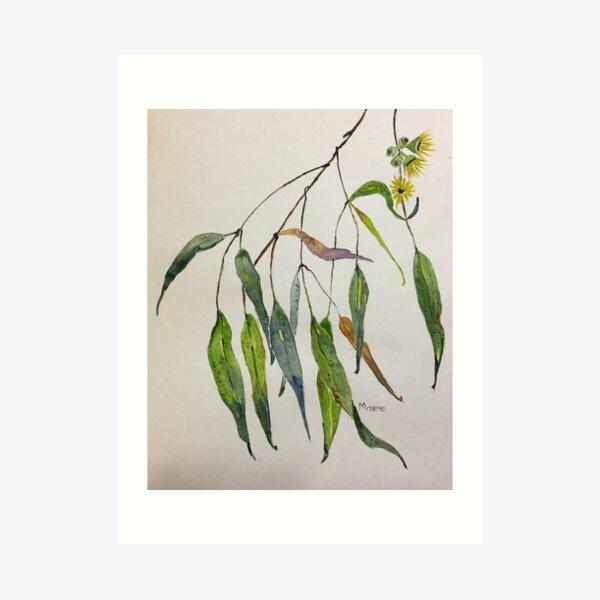 Gum leaves - Botanical illustration Art Print