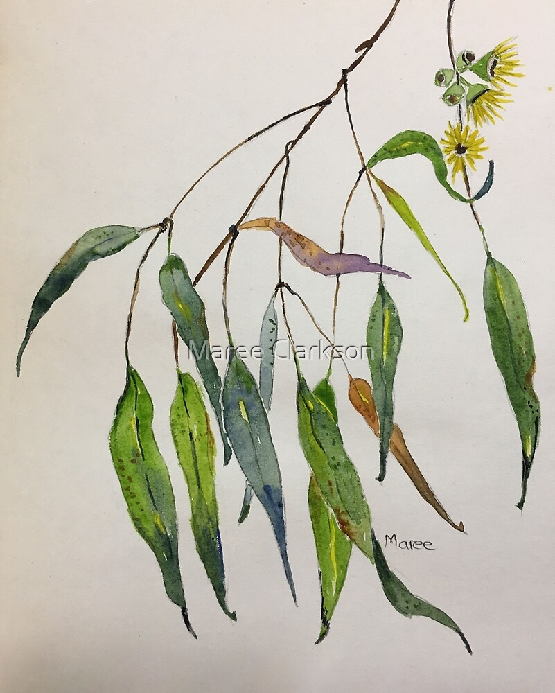 Gum leaves - Botanical illustration by Maree Clarkson
