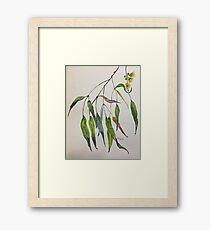 Gum leaves - Botanical illustration Framed Print