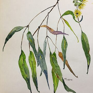 Gum leaves - Botanical illustration by MareeClarkson
